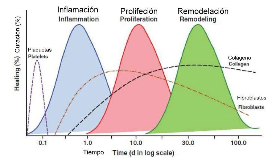 Evolucion de la regeneracion