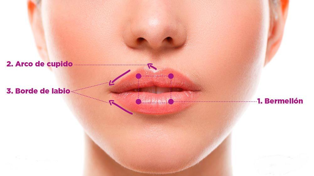 labios-definicion (1)
